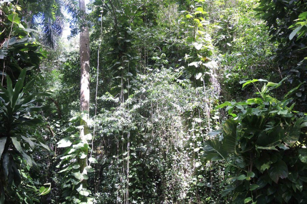 Vinales Tal Nationalpark - Sehenswürdigkeiten Kuba